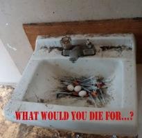 Birds Nest 492 x 481